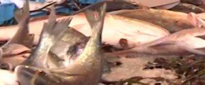 Operazione a Riposto, sequestrate tre tonnellate di tonno senza tracciabilità