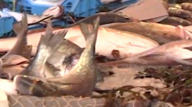 pesca, sequestro, tonno, Catania, Cronaca