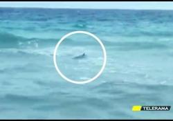 Paura a San Foca per la presenza di tre squali
