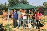 """Emergenza randagismo ad Agrigento: """"Anche 50 cuccioli abbandonati a settimana"""""""