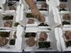 Nel 2035 un decimo della carne sarà con proteine alternative