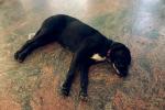 Scappa dal temporale e si rifugia in un bar, grazie a Facebook un cane torna a casa a Palermo