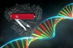 La Crispr e' una sorta di forbice naturale che permette di tagliare il Dna in punti specifici e si ispira al funzionamento di un sistema di difesa immunitaria comune fra i batteri. (fonte: Pablo Alcón / Università di Copenhagen)