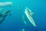 Delfino torna nel golfo di Catania dopo 20 anni, a riconoscerlo una biologa marina