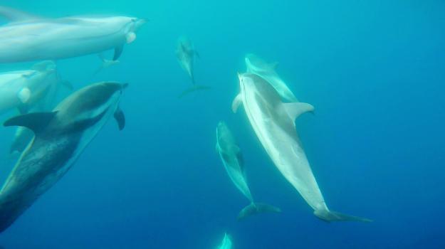 delfino catania, Clara Monaco, Catania, Società