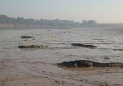 Il video girato con un drone lungo il fiume Daly, nel Territorio del Nord
