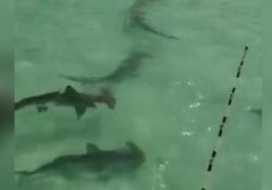 Si è imbattuto in dieci squali martello
