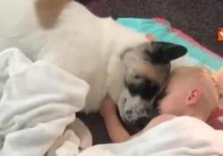 Sintonia perfetta tra il neonato e l'animale