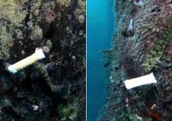 Negli oceani c'è di tutto: dai filtri di sigaretta alle bottiglie e ai tappi, dai bicchieri ai contenitori per cibo, ai famigerati cotton fioc