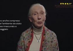 La celebre etologa britannica e l'appello in occasione dei 20 anni della sezione italiana del suo istituto, in prima linea nella difesa dei primati