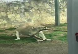 Una gara stramba allo zoo di San Antonio in Texas