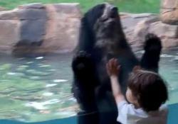 La scenetta è stata ripresa allo zoo di Nashville