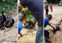 Un gruppo di uomini tenta di salvare la vita del cucciolo