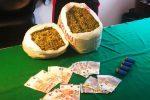 Trovata una piantagione con 300 piante di marijuana a Torretta, un arresto