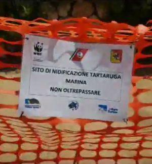 A Siculiana Marina una tartaruga depone le uova sulla spiaggia