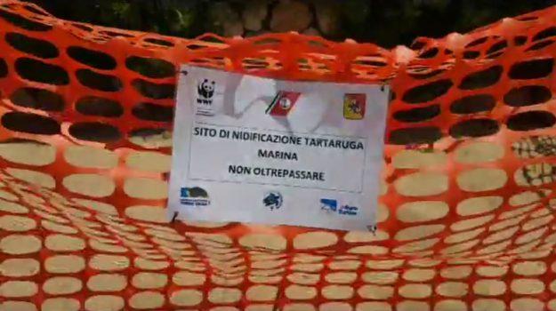 tartaruga depone uova a siculiana, Agrigento, Società