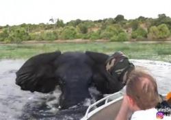 La scena filmata lungo un fiume in Botswana.