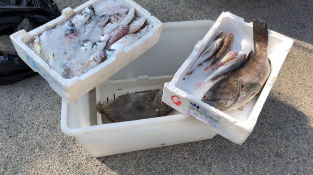 sequestro pesce augusta, Siracusa, Cronaca