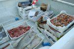 Sequestrati 193 chili di pesce non tracciato a Porto Empedocle, sanzioni per 22 mila euro