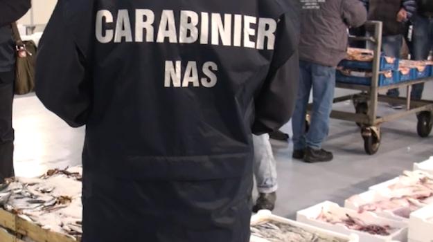 pesce sequestrato catania, Catania, Cronaca