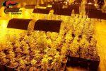 Coltivavano marijuana in una serra a Poggioreale, arrestati cinque palermitani