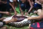 Indonesia, pitone di 7 metri ingoia una donna tutta intera