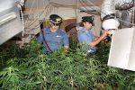 Droga, una villetta trasformata in una serra di cannabis: un arresto a Casteldaccia