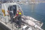 Sequestrate 2,6 tonnellate di tonno rosso a Porticello