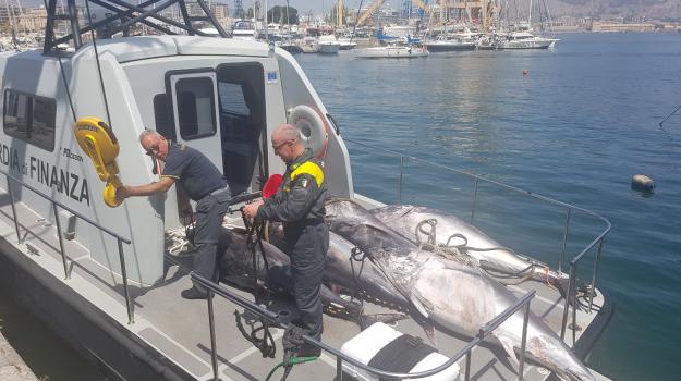 sequestro tonno porticello, Palermo, Cronaca