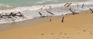 Resti di alberi in spiaggia ad Eraclea Minoa, i turisti abbandonano il litorale