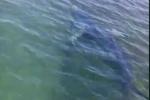 Squalo nel mare di Trapani, avvistato da due pescatori