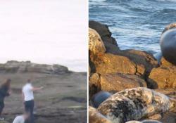 Presi di mira gli animali della St Mary Island Nature
