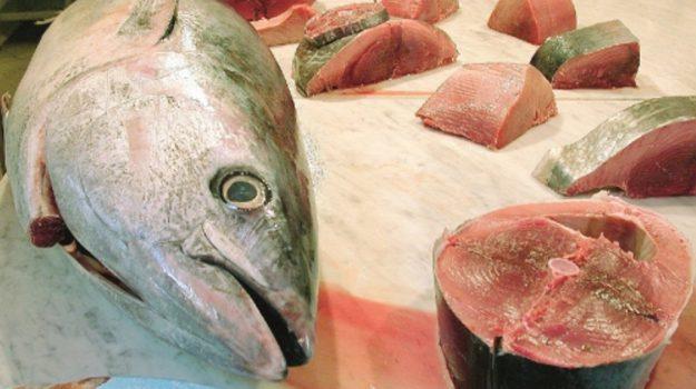 bari, sequestro tonno rosso, Trapani, Cronaca
