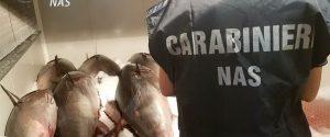 Allerta tonno rosso in Sicilia, controlli a Catania e Messina: sequestrati 14 quintali