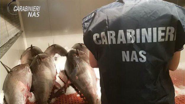 sequestro tonno rosso, Catania, Cronaca