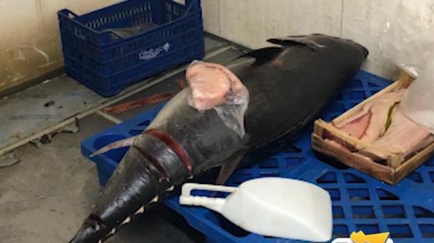 Messina, tredici persone al pronto soccorso dopo aver mangiato tonno