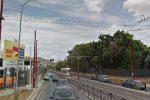 Palermo, randagio semina il terrore a Borgo Nuovo: catturato