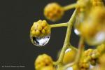 Scoperto il primo messaggero molecolare che mette le piante in comunicazione con i loro germogli (fonte: Ferruccio Zanone, Flickr)