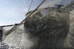 Sciacca, oltre 2 milioni per finanziare la pesca