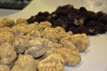 Tartufo: studio decodifica dna cibo tra più aromatici mondo