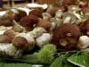 Dai funghi unarma per battere la preeclampsia