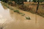 Maltempo: forti piogge in Lombardia, danni all'agricoltura