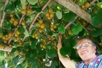 Nei kiwi vitamina C raddoppiata in 50 milioni di anni