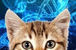Negli Usa è boom dei test genetici per cani e gatti, ma per il mondo scientifico non sono attendibili (fonte: Dna, Pixabay; il gatto: pngimg.com)