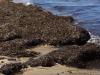 Litorale di Marsala invaso dalle alghe, la segnalazione: