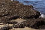 """Litorale di Marsala invaso dalle alghe, la segnalazione: """"Qui indecenza e abbandono"""""""