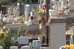 Gabbiani attaccano i visitatori al cimitero dei Rotoli a Palermo