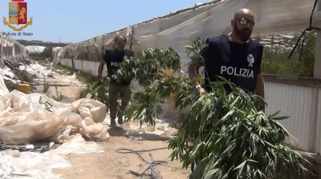 arresti Ragusa, serra marijuana, Ragusa, Cronaca