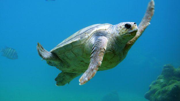 spiaggia lampedusa tartarughe marine, Agrigento, Società