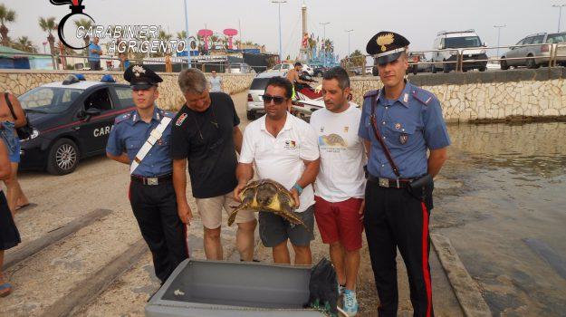 tartaruga salvata agrigento, Agrigento, Cronaca